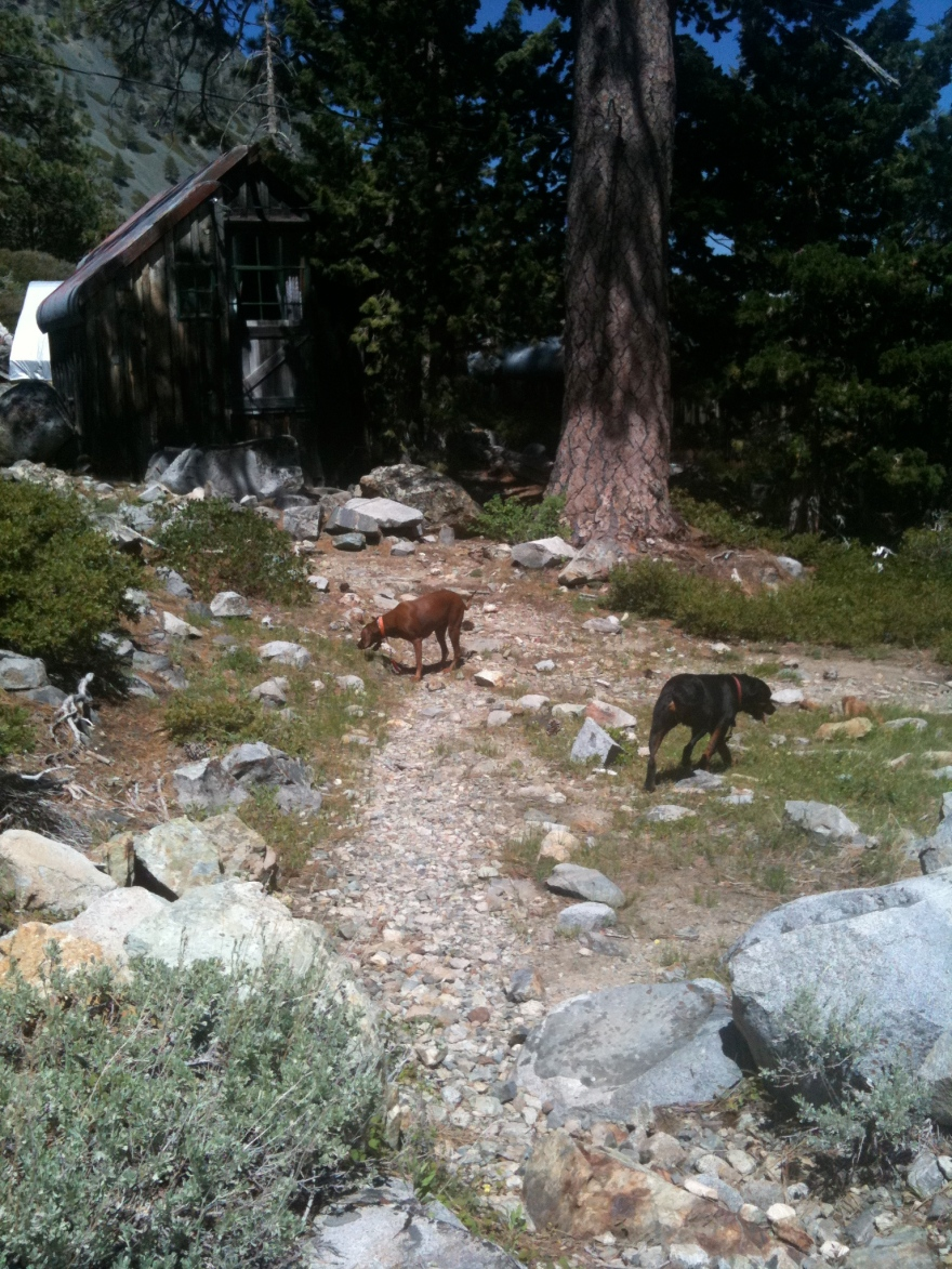 Lake Tahoe dogs
