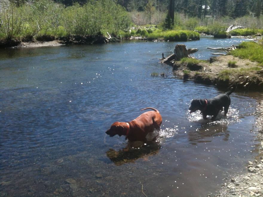 Lily Lake dogs